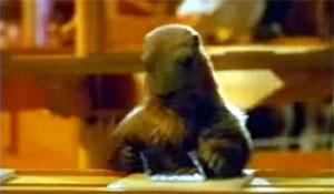 et la marmotte