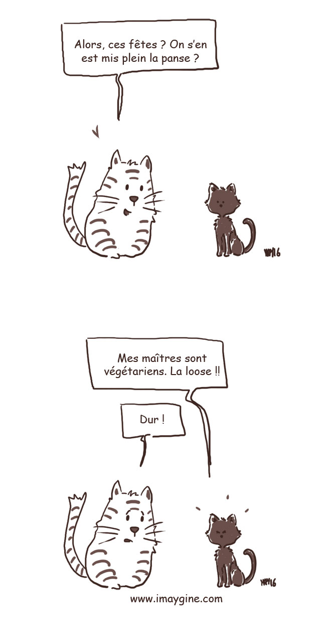 breves-chats